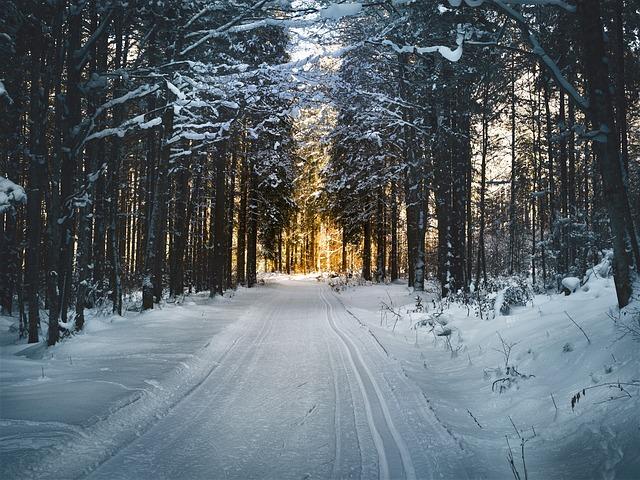 Skispor i skogen